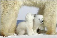 Polarsoscubsmom
